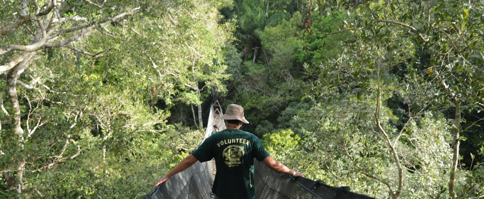 Projects Abroad volunteers scaling a canopy walkway during their Conservation volunteering in the Amazon Rainforest in Peru.